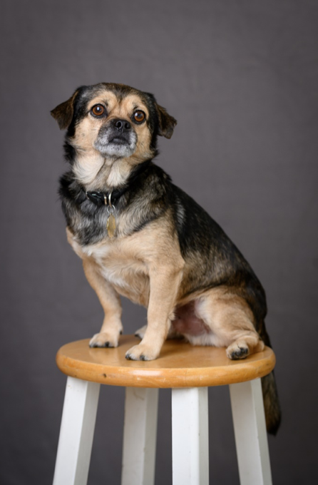 Fur Real: True Stories About the Benefits of Emotional Support Animals (ESAs) at Hitchman Fiduciaries