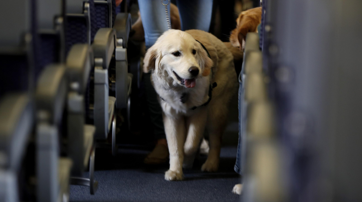 Flying With an Emotional Support Animal (ESA)? What You Need to Know!